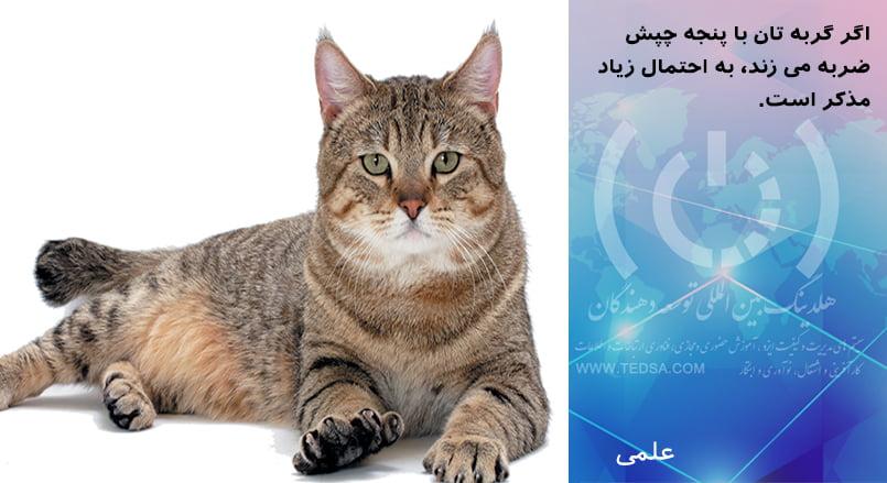 پنجه گربه و جنسیتش