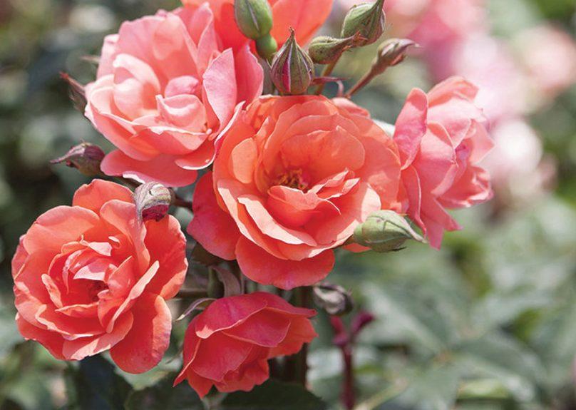 رنگ گلهای بهاری