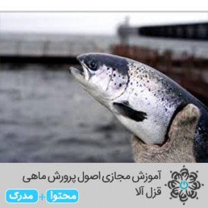 اصول پرورش ماهی قزل آلا