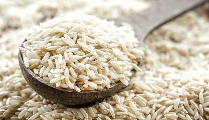حشره برنج