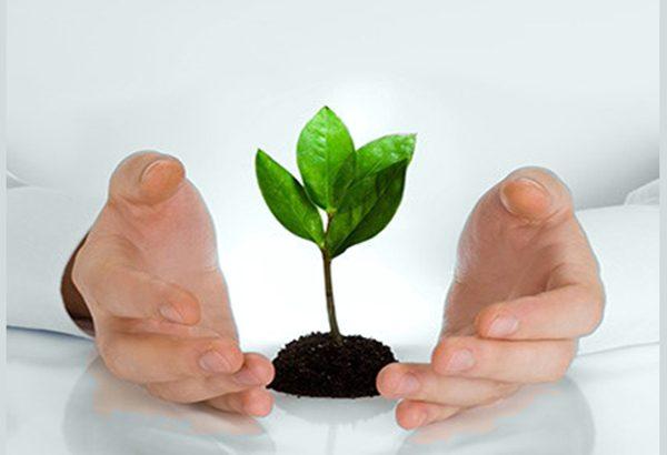 مراقبت از گیاه