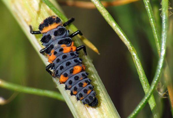 حیوانات و حشرات را از باغچهتان دور نگه دارید
