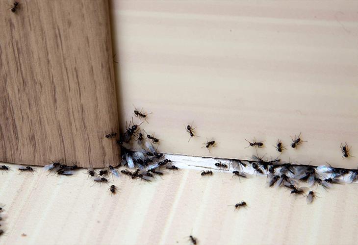 خلاصی از شر مورچه های خانگی