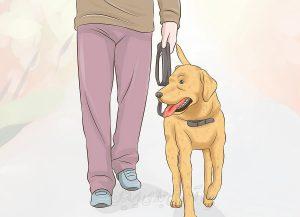 چگونه از حیوان خانگی مان مراقبت کنیم؟