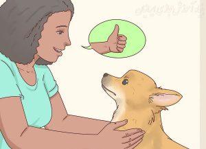 چگونه می توانید حیوانات خانگی را از وسایل خانه دور نگه دارید؟
